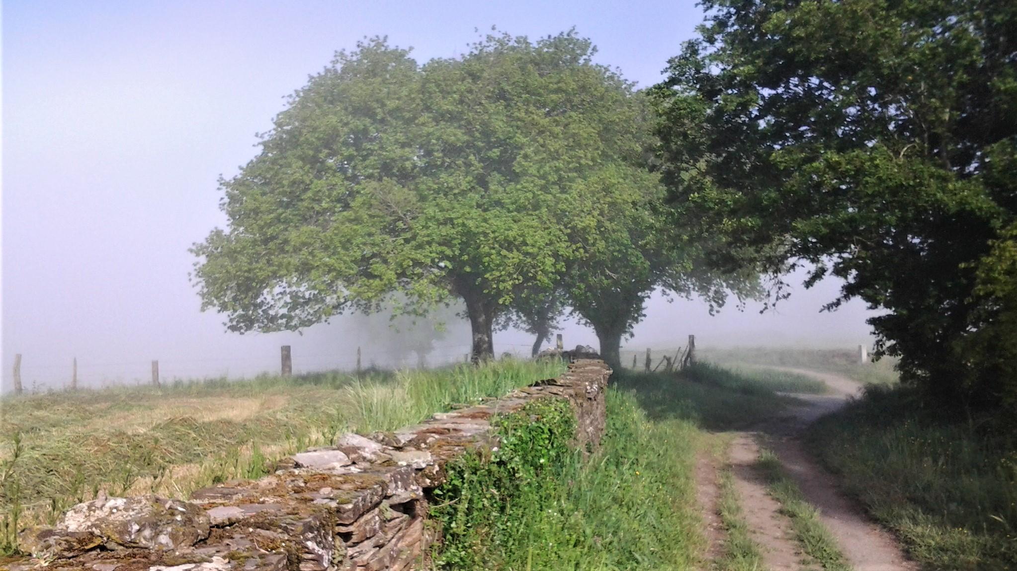 brume matinale de galice